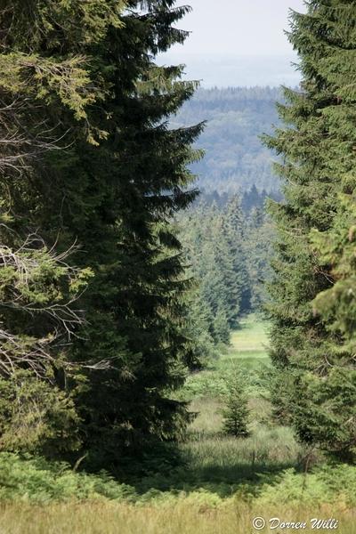 Ballade dans les Hautes fagnes et les sous-bois le 10-08-2011 Img_2704-800x600--2bbd931