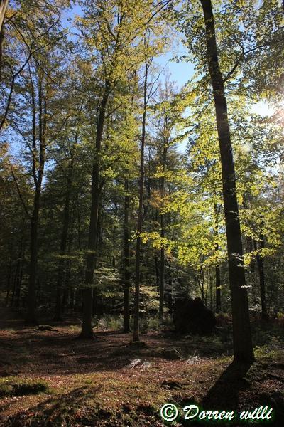 promenade sur les fagnes et alentours ( jalhay ) le 16-oct-2011 Dpp_jalhay---16-o...1---0010-2dd6cdc
