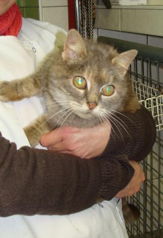 Sansa chatte âgée en cage en cabinet véto - dpt 56/35 Dsc03414-305f446