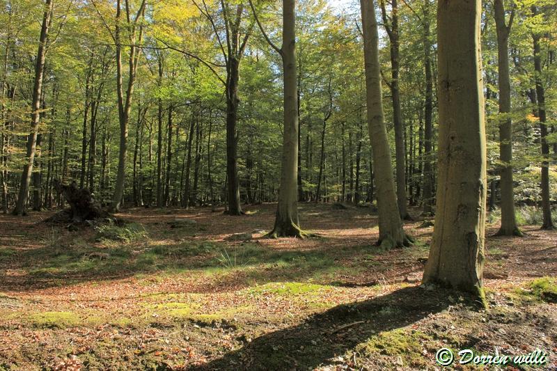 promenade sur les fagnes et alentours ( jalhay ) le 16-oct-2011 Dpp_jalhay---16-o...1---0016-2dd6e02