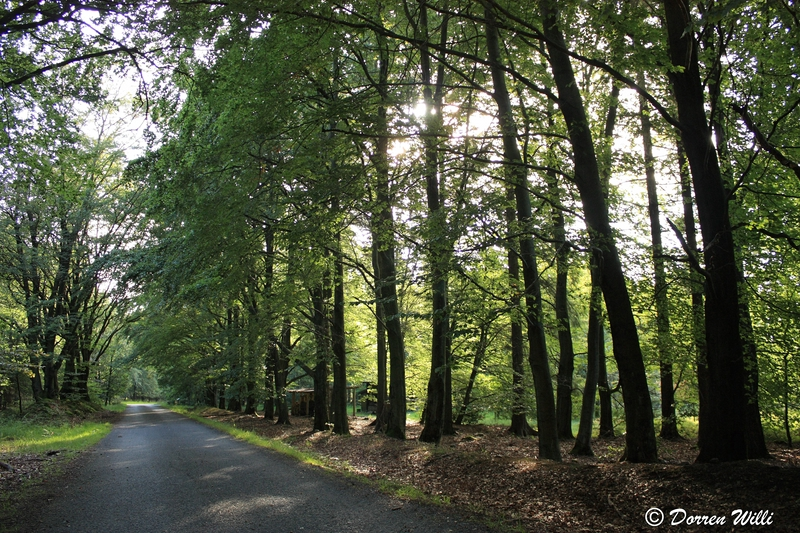 Ballade dans les Hautes fagnes et les sous-bois le 10-08-2011 Img_3103-800x600--2bbe945