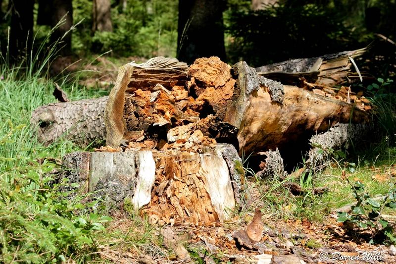 Ballade dans les Hautes fagnes et les sous-bois le 10-08-2011 Img_2715-800x600--2bbd971