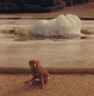 Mon chien Voyou, mes bébés à plumes et compagnie E-et-cie-vouyou-00-2b608ef