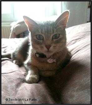 ADELIA rebaptisée FLIPPY gentille femelle de 2 ans  Adelia---co---08-2aec8fd