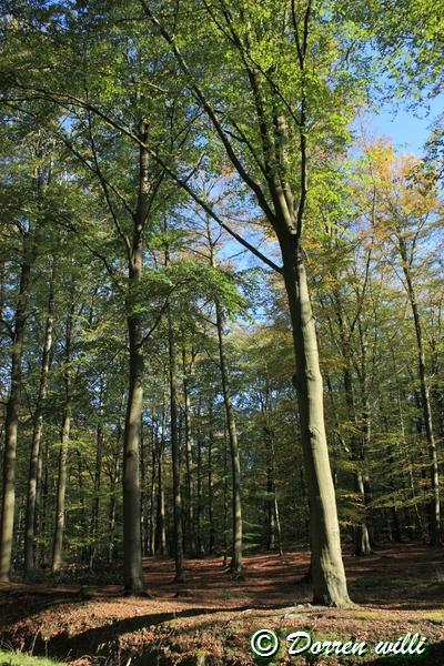 promenade sur les fagnes et alentours ( jalhay ) le 16-oct-2011 Dpp_jalhay---16-o...1---0004-2dd6bb3