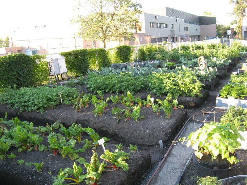 Le Jardin à la brunante (2011) Jardin collectif du Patro Img_2124-2b606c9