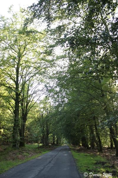 Ballade dans les Hautes fagnes et les sous-bois le 10-08-2011 Img_3084-800x600--2bbe892