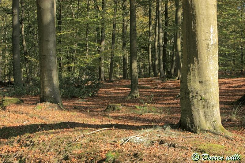 promenade sur les fagnes et alentours ( jalhay ) le 16-oct-2011 Dpp_jalhay---16-o...1---0014-2dd6dc8
